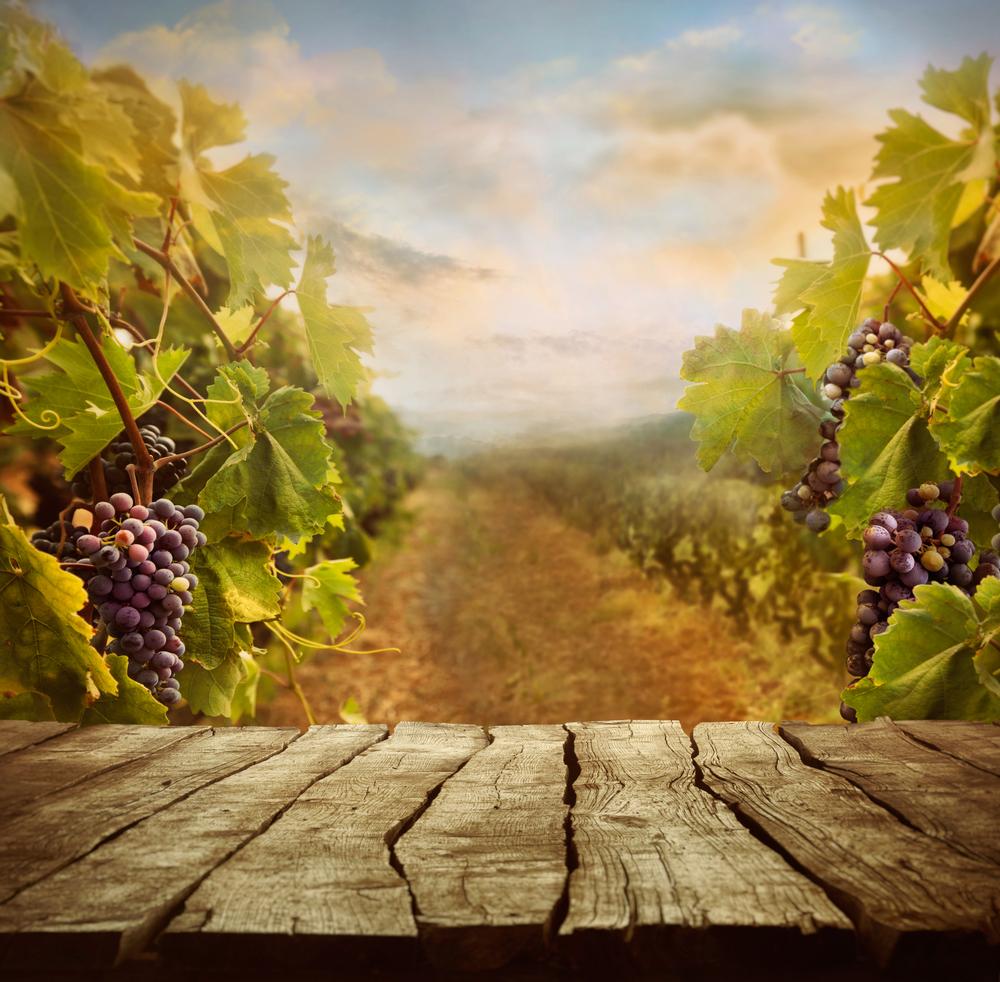 ビオディナミとは!?おすすめビオディナミワイン7選 ~世界が注目するアロイス・ラゲデール社のワイン~