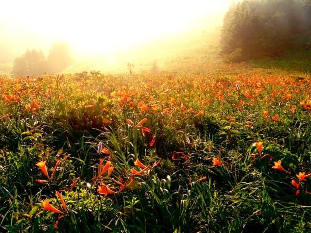ブドウ栽培に適した長野の気候