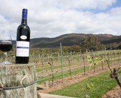 オーストラリアのおすすめワイン (1)