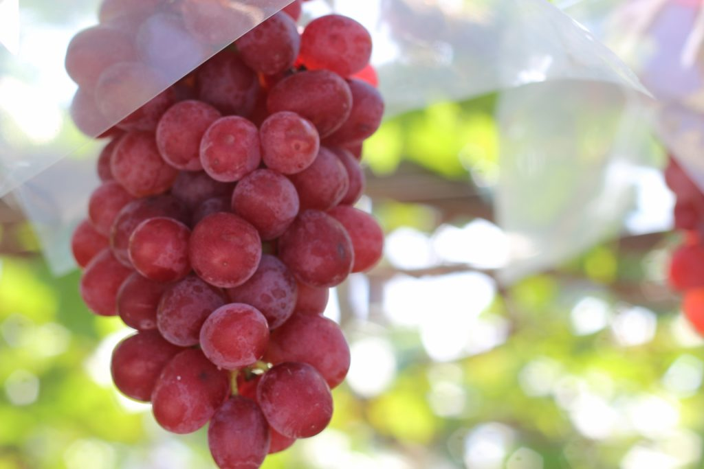 甲州ワインのおすすめ5選をご紹介【世界が注目する山梨ワインの魅力】