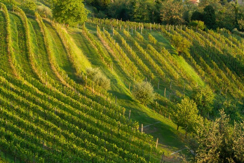 フリウリ・ヴェネツィア・ジューリアのワイン