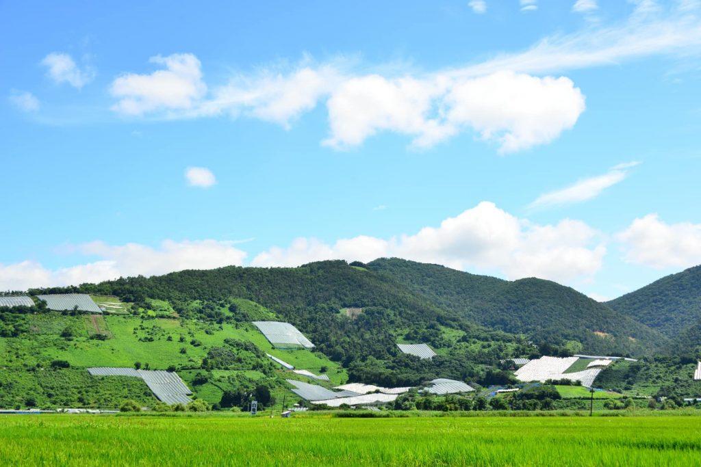 【山形の人気ワインおすすめ5選】東北銘醸地の気候や歴史を徹底解説!